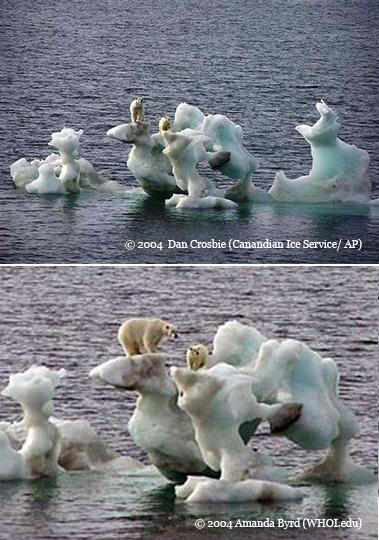 Two similar images taken at the same time of polar bears standing on a chunk of ice